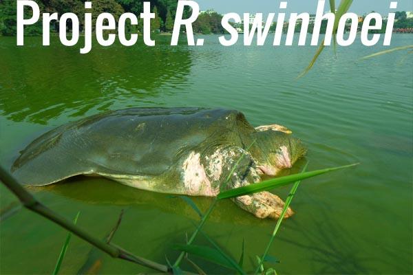 Project R. swinhoei