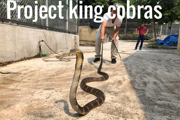 Project king cobras