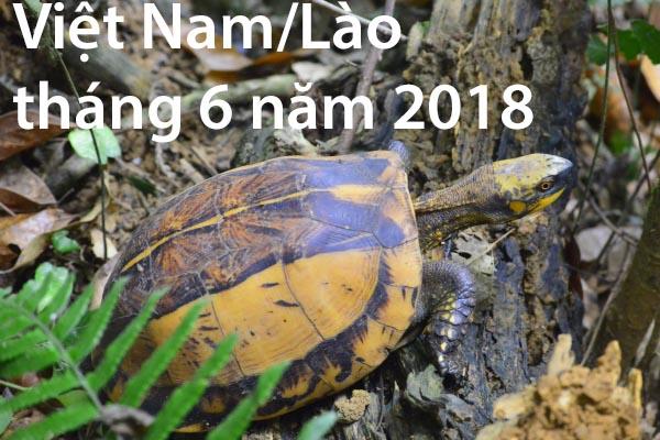 Việt Nam/Lào tháng 6 năm 2018