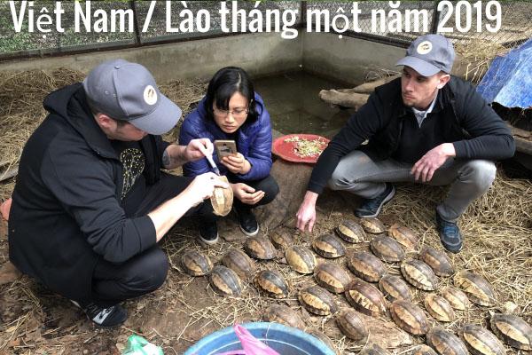 Việt Nam / Lào tháng một năm 2019
